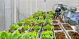 How innovation is driving solutions in food security